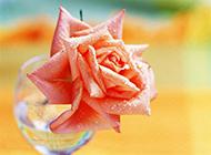 鲜花素材唯美娇艳的粉玫瑰