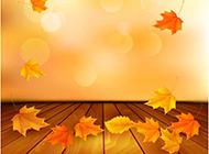 枫叶秋天植物图片手机壁纸