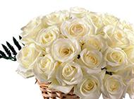 一篮子白玫瑰鲜花摄影图片