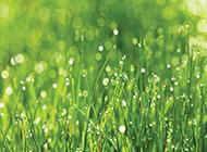 雨后的草地桌面背景图片
