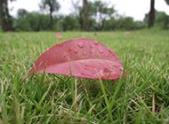 草地上的一片落叶图片