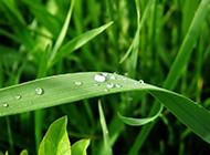 高清绿色叶子清新背景图片