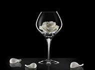 红酒杯里的一朵白玫瑰花意境图片