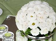 白玫瑰花小清新唯美图片大全大图