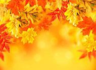 秋天的金色枫叶ppt背景图片