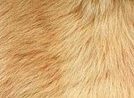 桌面背景图片素材小动物毛发皮毛