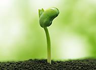 绿色嫩芽简约高清ppt背景图片