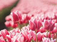 浪漫春日清新唯美风景桌面壁纸