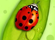 绿色叶子和瓢虫高清护眼壁纸