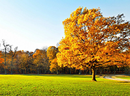 ppt一棵树唯美背景图片