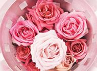 新娘捧花粉玫瑰图片精美写真