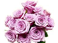 紫玫瑰花图片唯美背景壁纸推荐