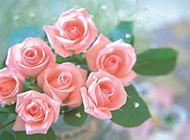 花瓶中的粉玫瑰特写图片