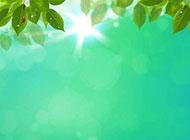 夏日阳光与树叶背景高清图片