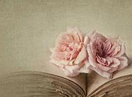 旧书本上的粉红花瓣图片素材