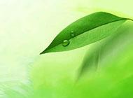 绿色叶子背景高清图片素材