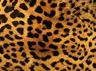 豹纹皮毛斑纹唯美PPT背景图