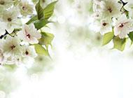 梦幻白色唯美花卉清新风格背景美图