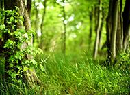自然景色ppt背景图片素材