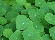 绿色叶子小清新护眼背景图片