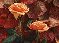 唯美鲜花黄玫瑰艺术插花图片素材