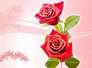 粉色玫瑰花百合花纹幻灯片背景图片