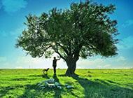 绿色植物唯美意境风景图片