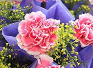 绚丽多彩的康乃馨花束图片