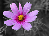 浪漫春日创意黑白色系摄影美图