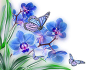 紫色蝴蝶兰花梦幻背景图片