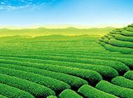 绿色植物小清新创意设计壁纸