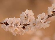 粉嫩鲜花素材图片欣赏