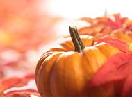秋天里的大南瓜图片