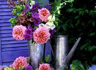 唯美清新花束静物装饰美图