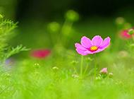 清新唯美花朵ppt背景图片
