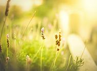 大自然清新绿色花草风景壁纸