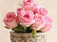 粉色浪漫玫瑰清新唯美图片下载