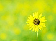 文艺淡雅向日葵大气竖版背景图片素材