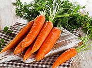 鲜嫩的非转基因胡萝卜图片