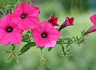 最新高清花卉ppt背景图片