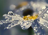 清晨雨后浪漫花卉水珠梦幻美景