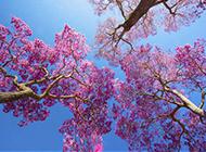 粉色梦幻樱花意境唯美图片
