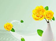 中国风美丽的黄玫瑰背景高清图片