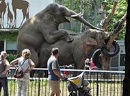 动物内涵图之大象也疯狂