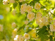 唯美小清新的花卉高清壁纸