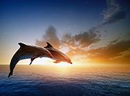人类的好朋友海豚高清图片