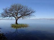 湖边的一棵大树风景桌面壁纸