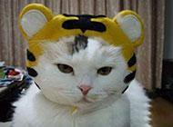 可爱动物图片之发威的猫