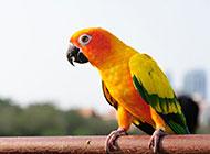 最聪明的鹦鹉高清图片