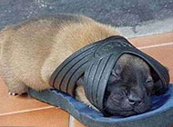 贪睡的小狗超萌搞笑图片